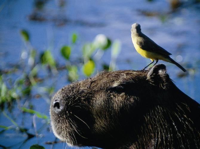 Qual a melhor época para ir ao Pantanal