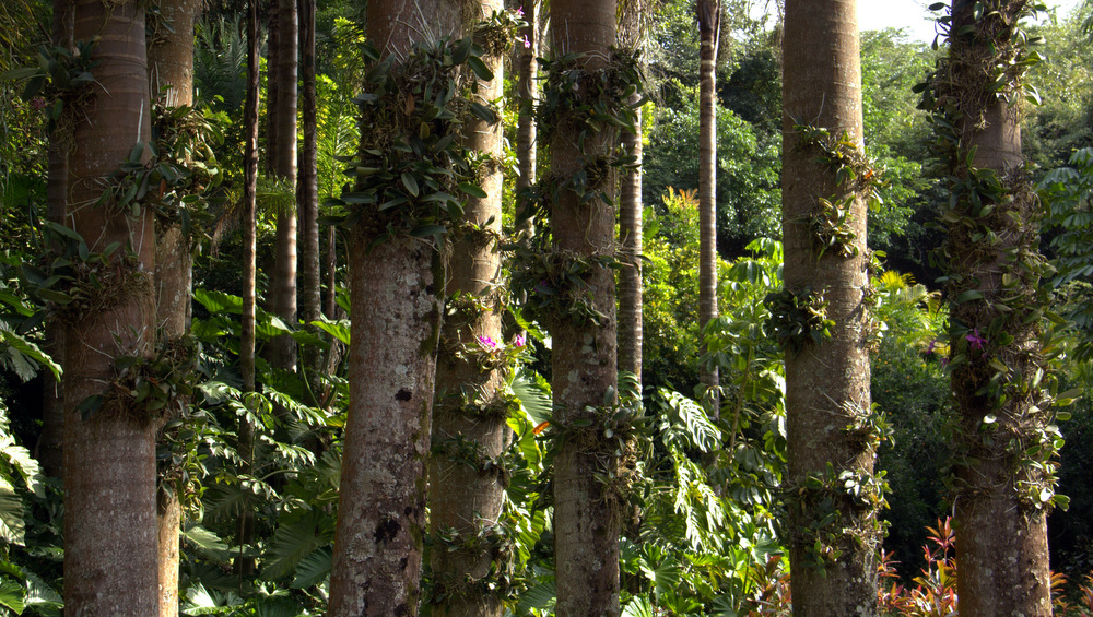 Instituto Inhotim ganha jardim de orquídeas