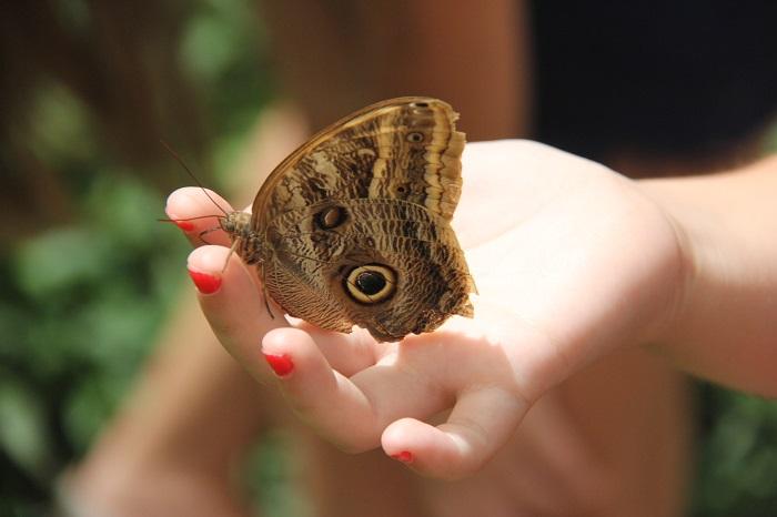 Borboletário Águias da Serra: onde as borboletas vêm em suas mãos