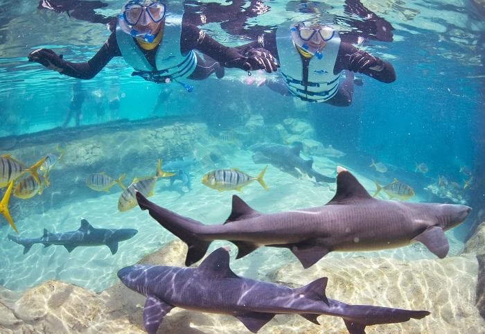 Que tal nadar com tubarões no Discovery Cove, em Orlando?