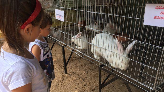 coelhos do zoo da fazenda