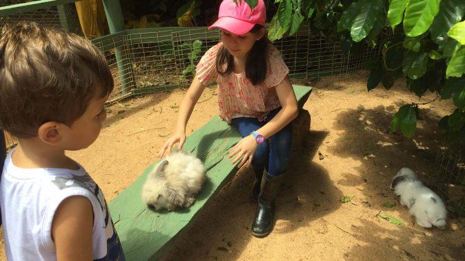 fazenda angolana coelhos