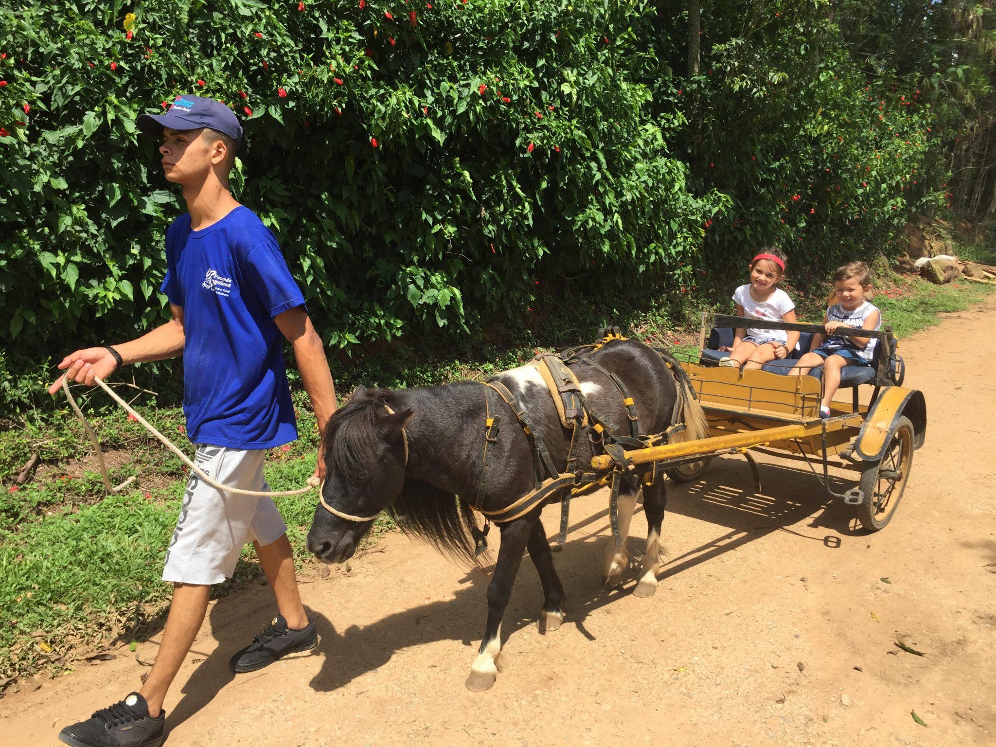 Fazenda Angolana em São Roque: natureza, coelhos e pôneis