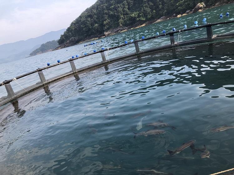 praia-das-sete-fontes-peixes