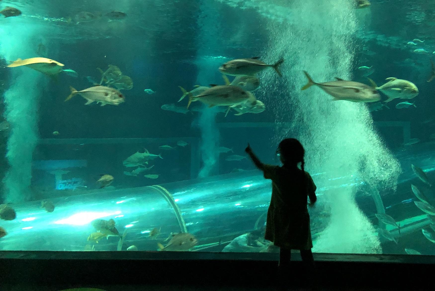 aquario-rio-de-janeiro