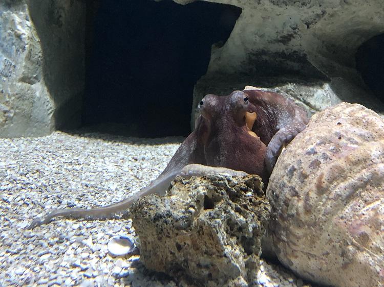 rio-de-janeiro-aquario-rj