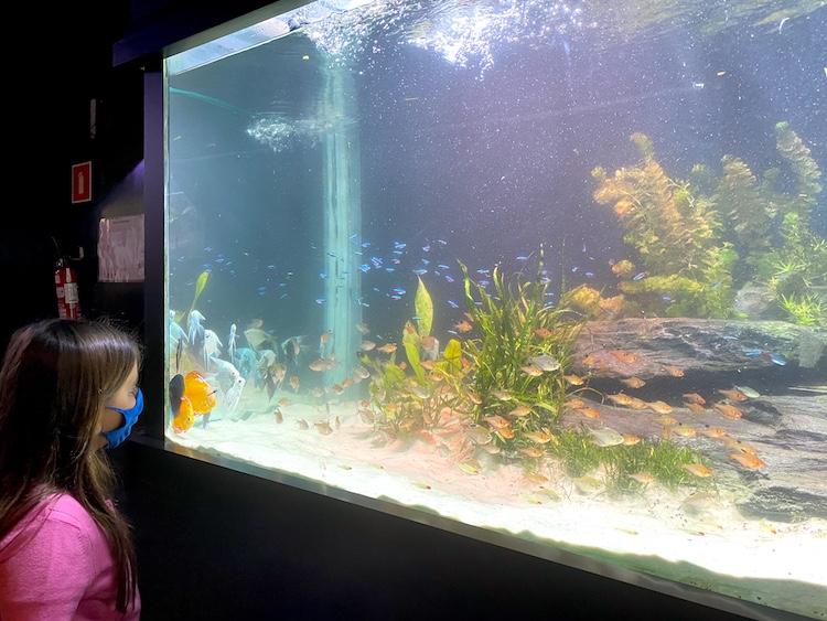 oceanic-aquarium-balneario-camboriu