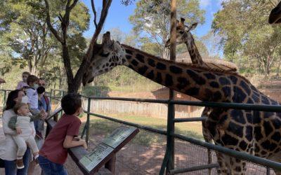 Zooparque Itatiba: teve até beijo de girafa